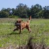 grca_puppy2012_0536
