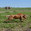 grca_puppy2012_0530