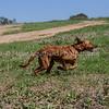 grca_puppy2012_0881