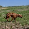 grca_puppy2012_0883