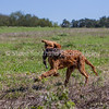 grca_puppy2012_0889