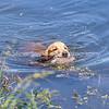 grca_puppy2012_1253