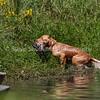 grca_puppy2012_1242
