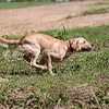 grca_puppy2012_0353