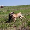 grca_puppy2012_0374