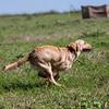 grca_puppy2012_0361