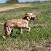 grca_puppy2012_0358