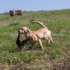 grca_puppy2012_0375
