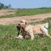 grca_puppy2012_0280
