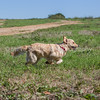 grca_puppy2012_0263