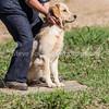 grca_puppy2012_0257