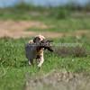 grca_puppy2012_0294