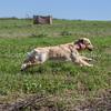 grca_puppy2012_0267