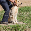 grca_puppy2012_0258