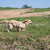grca_puppy2012_0260