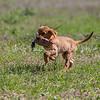 grca_puppy2012_0814