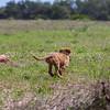 grca_puppy2012_0804
