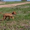 grca_puppy2012_0794