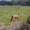 grca_puppy2012_0805
