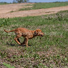 grca_puppy2012_0793