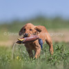 grca_puppy2012_0834