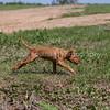 grca_puppy2012_0792