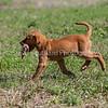 grca_puppy2012_0824