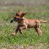 grca_puppy2012_0818