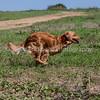 grca_puppy2012_0845