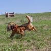 grca_puppy2012_0855