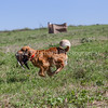 grca_puppy2012_0856