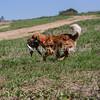 grca_puppy2012_0860