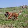 grca_puppy2012_0857