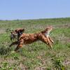 grca_puppy2012_0854