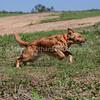 grca_puppy2012_0843