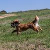 grca_puppy2012_0858