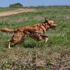 grca_puppy2012_0846