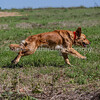 grca_puppy2012_0847