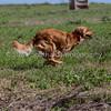 grca_puppy2012_0848