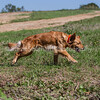 grca_puppy2012_0844