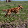 grca_puppy2012_0849