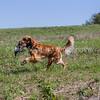 grca_puppy2012_0853
