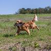 grca_puppy2012_0851