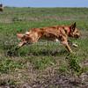 grca_puppy2012_0850