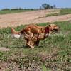 grca_puppy2012_0842