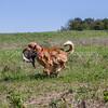 grca_puppy2012_0852