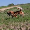 grca_puppy2012_0859
