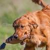 grca_puppy2012_0033