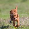grca_puppy2012_0030