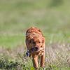 grca_puppy2012_0029